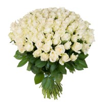 Роза белая 75