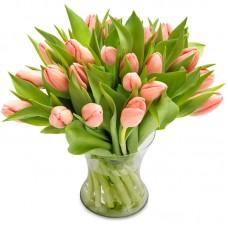 Тюльпан розовый 25
