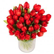 Тюльпан красный 33