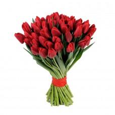 Тюльпан красный 25