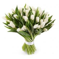 Тюльпан белый 25