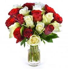 Роза красная и белая 15