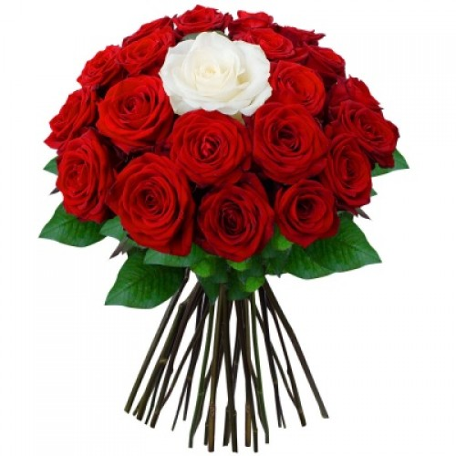 Роза красная с белой