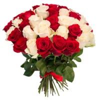 Роза красная и белая 51