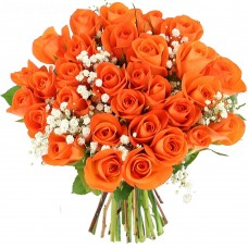 Роза рыжая 31