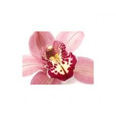 Орхидея один цветок