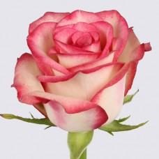 Роза Палома