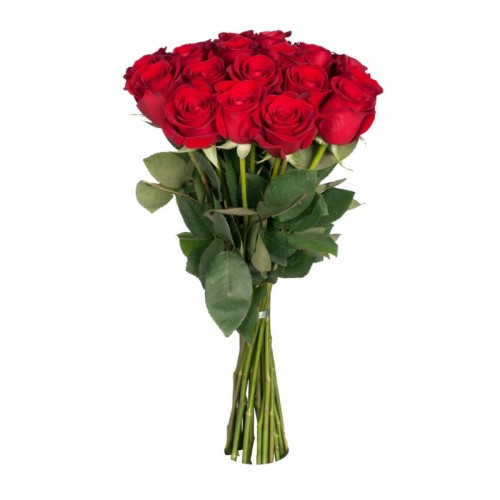 Роза красная 19