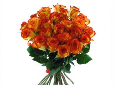 Роза микс колор 25