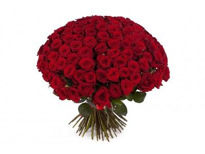 Роза красная 101