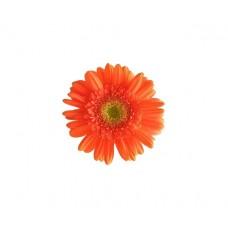 Гербера мини оранжевая