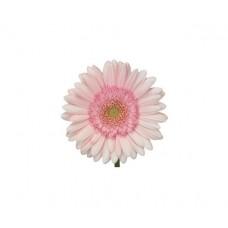Гербера мини нежно-розовая