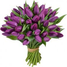 Тюльпан лиловый 45