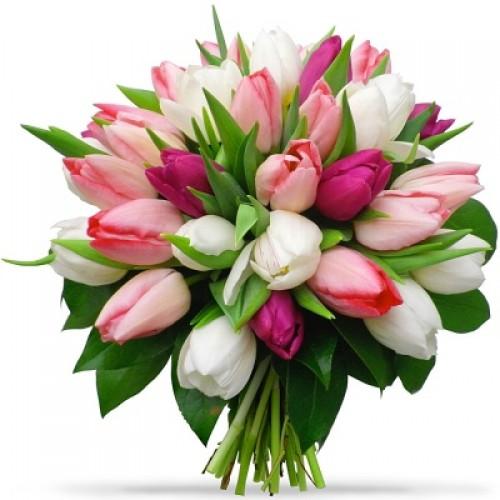 Тюльпан №29