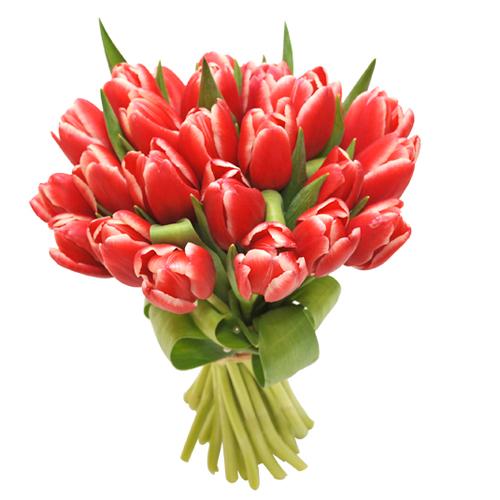 Тюльпан 21