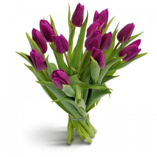 Тюльпан лиловый 13