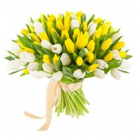 Тюльпаны белые с желтыми 101