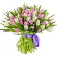 Тюльпаны белые с розовыми 101