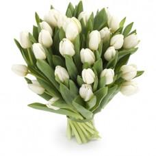 Тюльпан белый 15