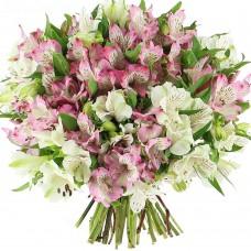 Альстромерия розовая с белой