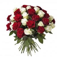 Роза белая с красной 31