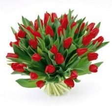 Тюльпан №56
