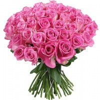 Роза розовая 55