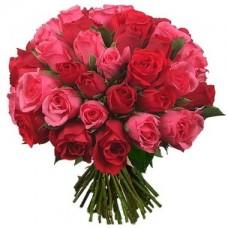Роза темно-розовая с красной