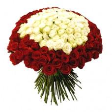 Роза красная с белой (Эквадор)