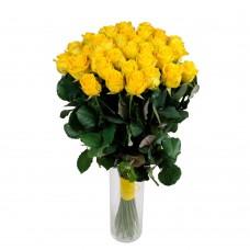 Роза желтая 31
