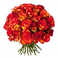 Роза хай меджик 25