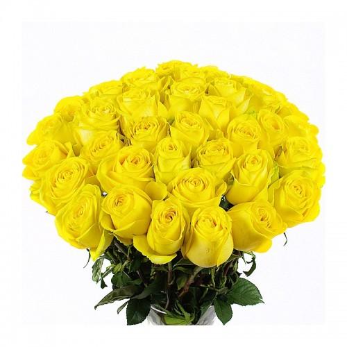 Роза желтая 55