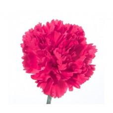 Гвоздика ярко-розовая