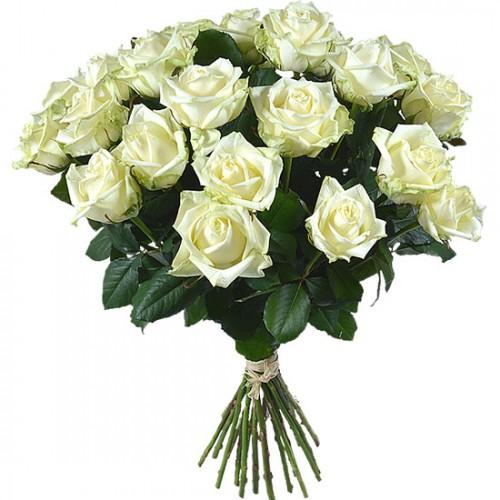Роза белая 25