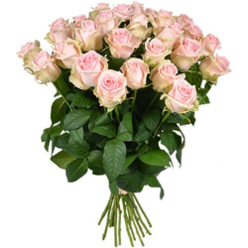 Роза розовая 25